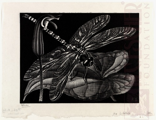 Libellula (Dragonfly). March 1936, Wood engraving.