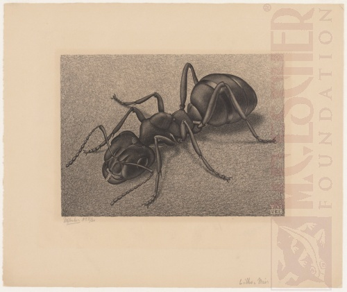 Ant. May 1943, Lithograph.