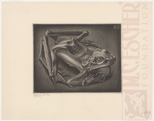 Mummified Frog. August 1946, Mezzotint.