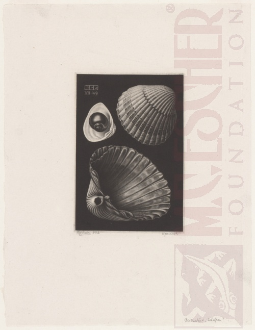 Sea-shells. July 1949. Mezzotint.
