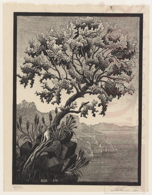 Carubba Tree. February 1932, Woodcut, printed from two block.