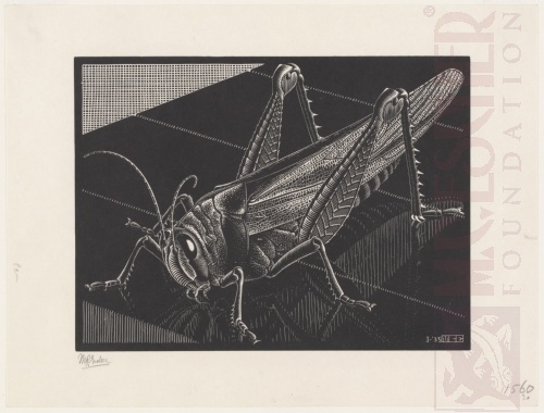 Grasshopper. March 1935, Wood Engraving.