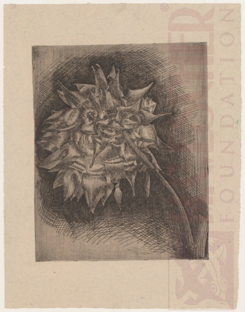 Flower. 1920, Etching.