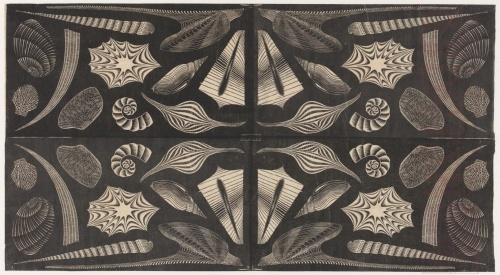 Sea Shells. 1920 or 1921, Woodcut.