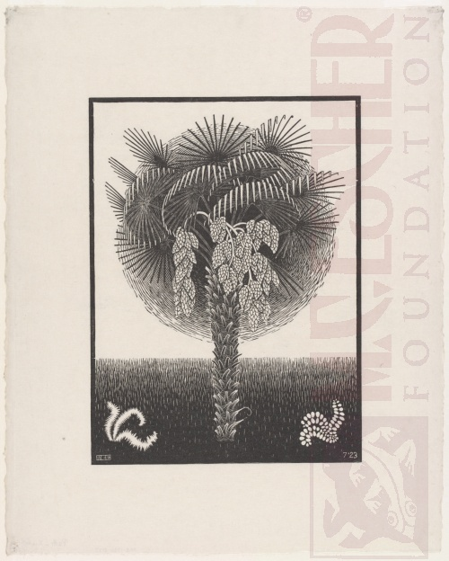 Palm Tree. July 1923, Woodcut.